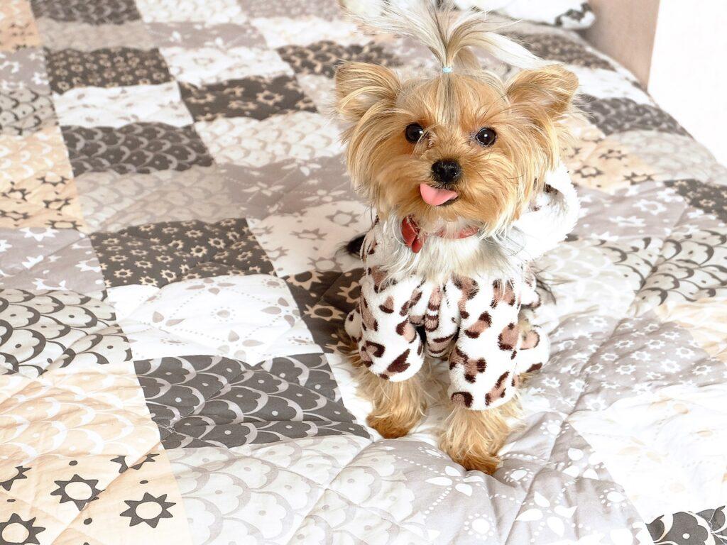 dog 2420611 1280 1024x768 - Educación financiera: ¿Asegurar a nuestras mascotas? - networking coworking emprededores empresarios